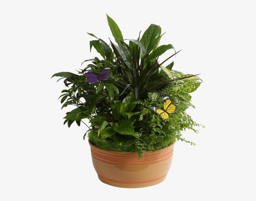 """Horizon Planter, 10"""" Caramel - Garden, transparent png #882220"""