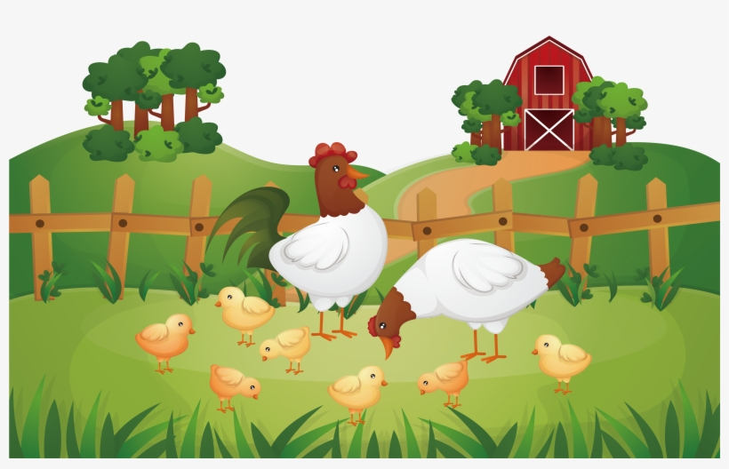 Animal Farm Chicken Rooster Poultry Farming - Chicken Farm Illustration, transparent png #886854