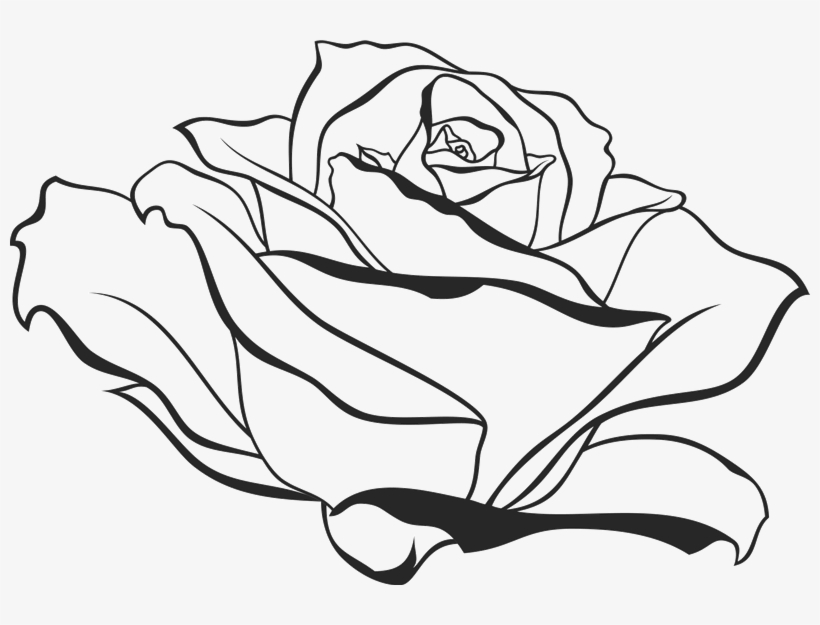 800 X 545 6 - Side View Rose Drawing, transparent png #8877076