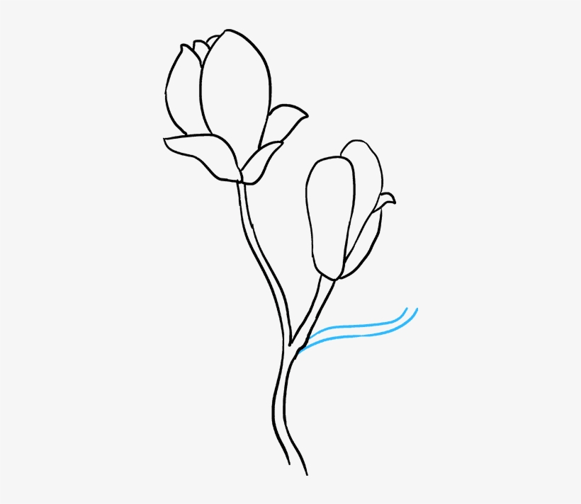How To Draw Flowers Really Easy Tutorial - Drawing Step By Step Magnolia Flower, transparent png #8955704