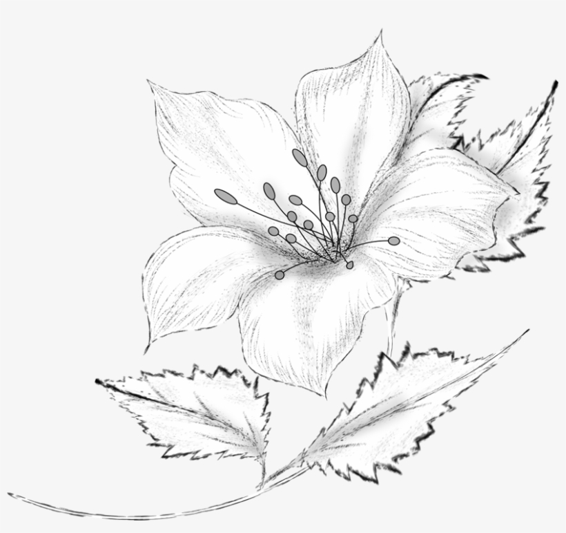 Drawing Decorative By Roula Kantaridou Flowers Vector - Pencil Flower Drawing, transparent png #8956071