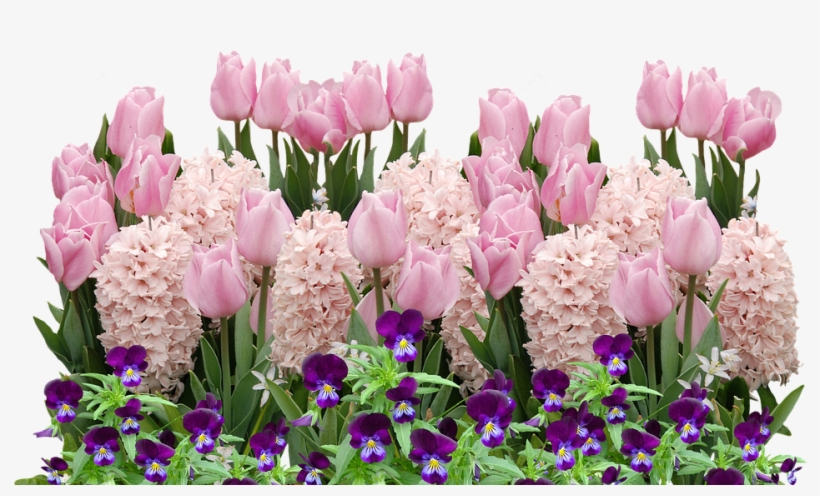 Spring, Tulips, Easter, Flower, Flowers, Spring Flower - Spring Flowers Png, transparent png #8957628