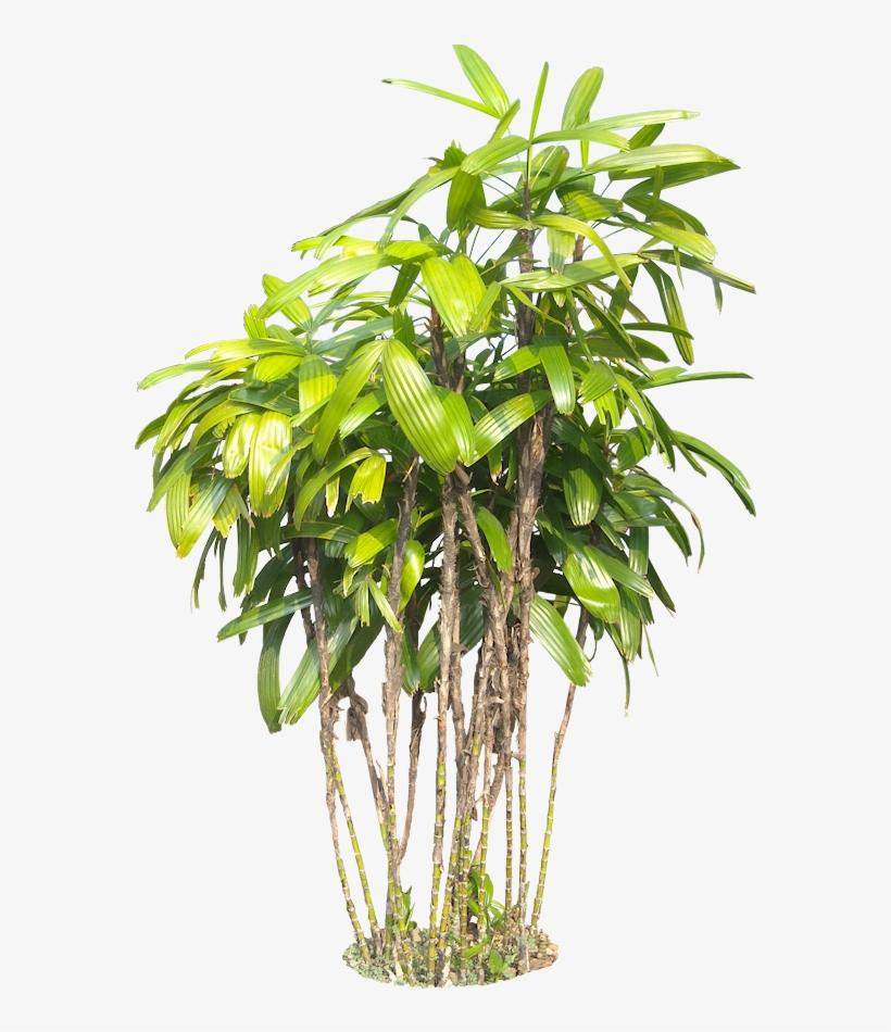 Raphise02l Photoshop Images, Tree Photoshop, Tropical - Tropical Garden Plants Png, transparent png #90568