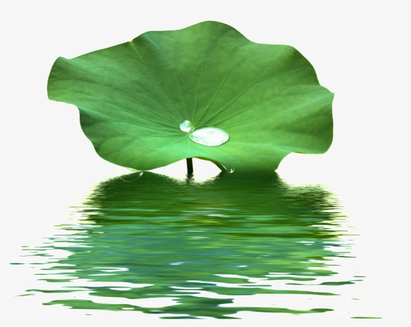This Product Design Is Lotus Leaf Water Wave Texture - Lotus Leaf Png, transparent png #90890