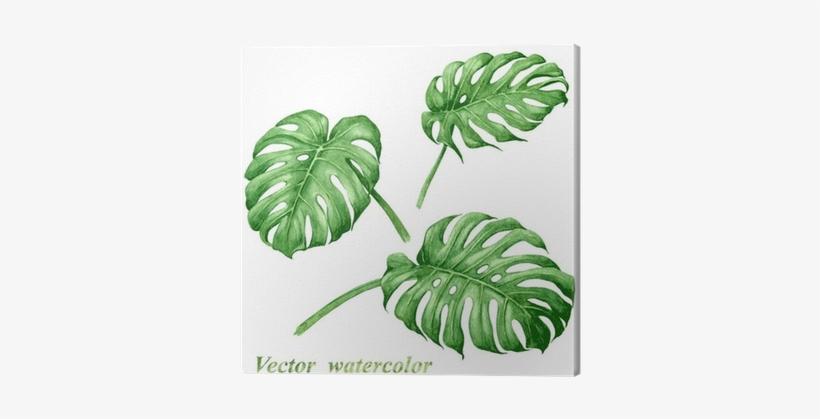 Set Of Watercolor Tropical Plants Leaves - Tropical Leaves Vector Watercolour, transparent png #91781