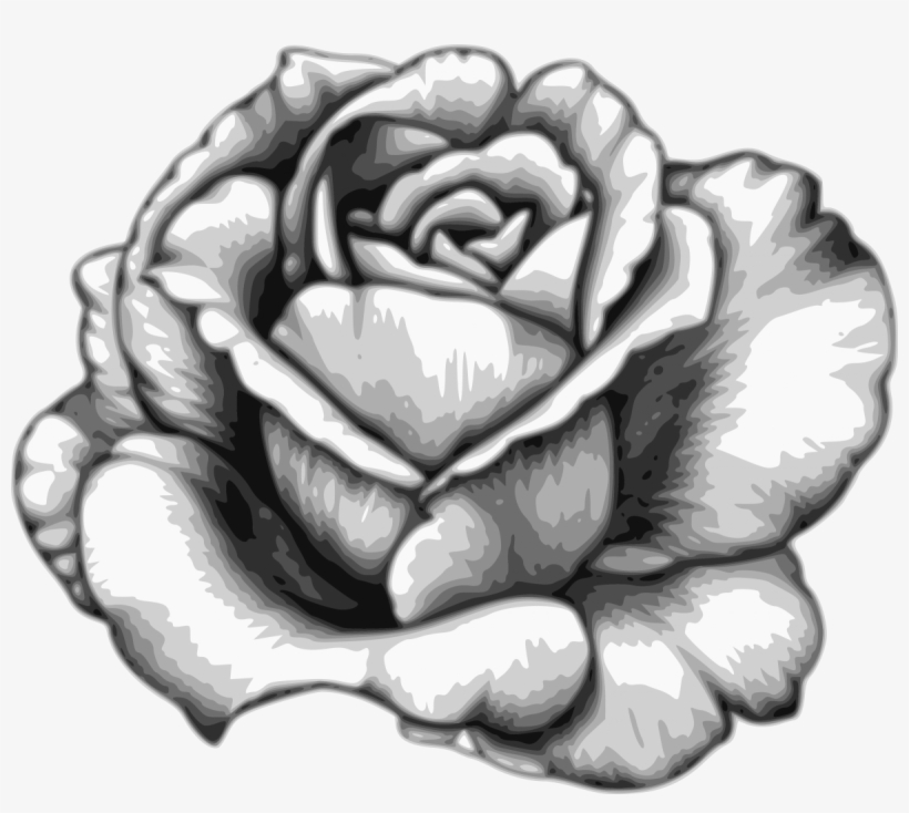 Drawing Flower Watercolor Black White Rose Fleur Dessin Realiste