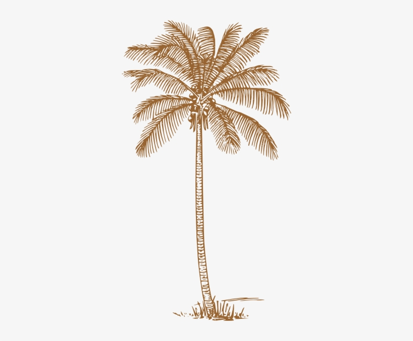 Palm Trees Wedding Invitations - Coconut Tree Clipart Black And White, transparent png #96467