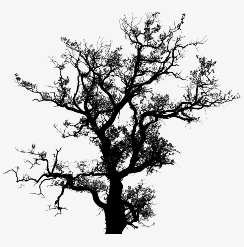 Tree Silhouette Drawing Trunk Free Commercial Clipart - Tree Old Png Free, transparent png #98492