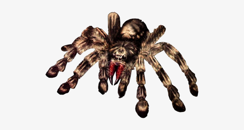 Giant Spider Png - Giant Spider Transparent, transparent png #98791
