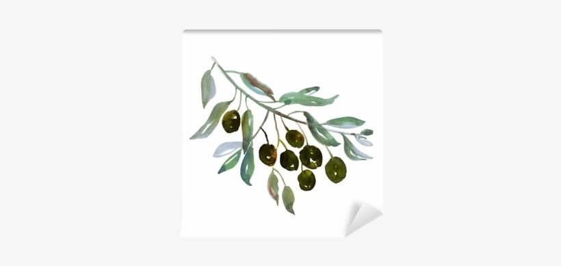 Olive Tree Branch On White Background Illustration - Olive Branch Watercolor Png, transparent png #901324