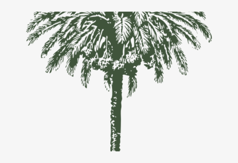 Date Palm Clipart Arabian - Date Palm Tree Drawing, transparent png #908844