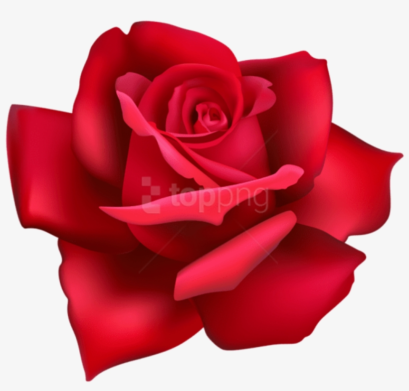 Free Png Rose Flower Red Png Images Transparent - Flower Pink Rose Png, transparent png #9071746