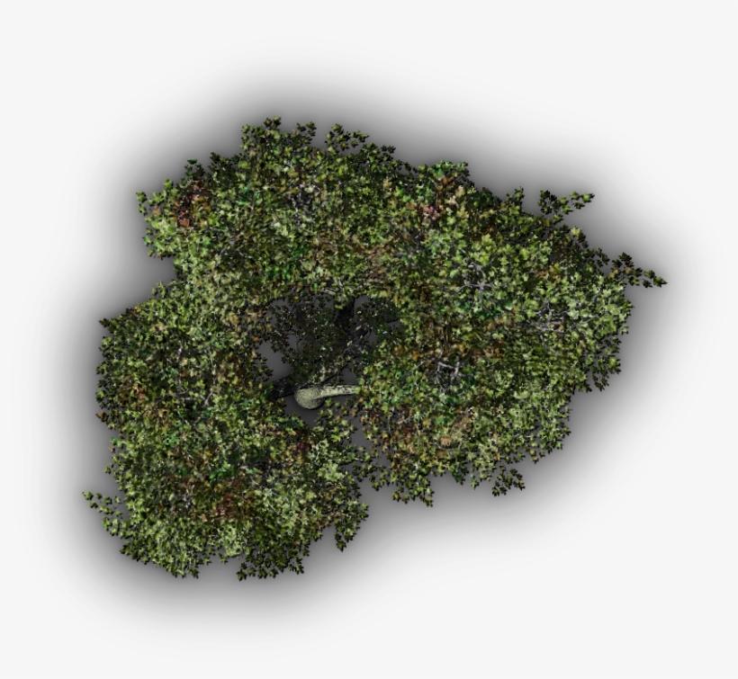 24 Mar 2009 - Arbol Vista Planta Png, transparent png #9072557