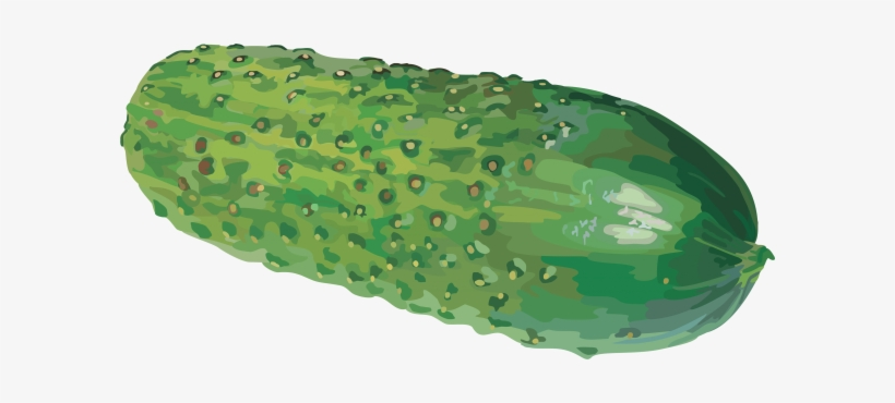 Cucumber Png Free Download - Watercolor Cucumber Png, transparent png #919333