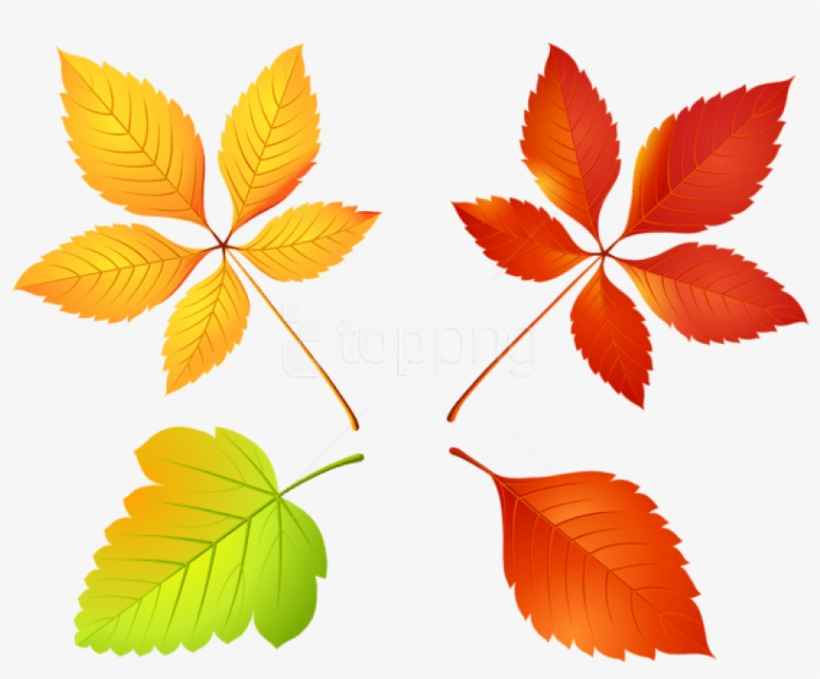83+ Leaves Fall Leaf Cl... Fall Leaves Clip Art Free | ClipartLook | 679x820