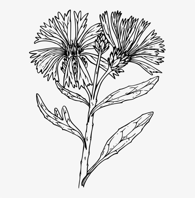 Black And White Line Art Floral Design Drawing Flower - Wildflower Line Art Png, transparent png #9117942