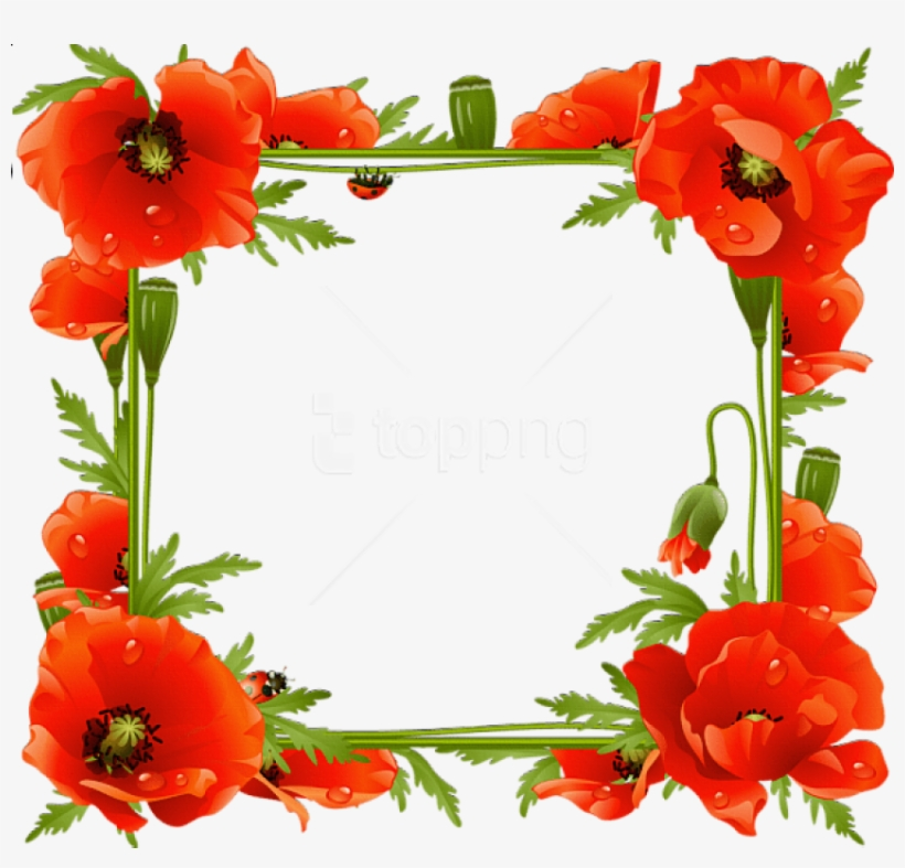 Free Png Best Stock Photos Poppies Transparent Frame - Flower Poppy Frame, transparent png #9257060