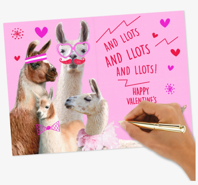 Love You Lots Llamas Valentine's Day - Llama Valentines Day Card Box, transparent png #9287125