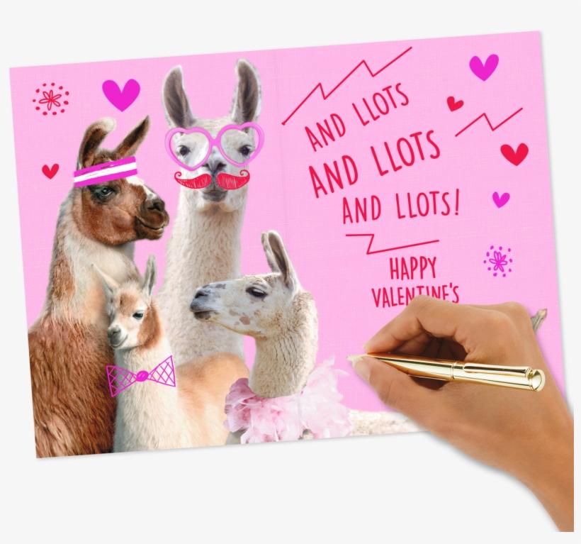 Love You Lots Llamas Valentine's Day - Llama Valentines Day Card Box, transparent png #9287125