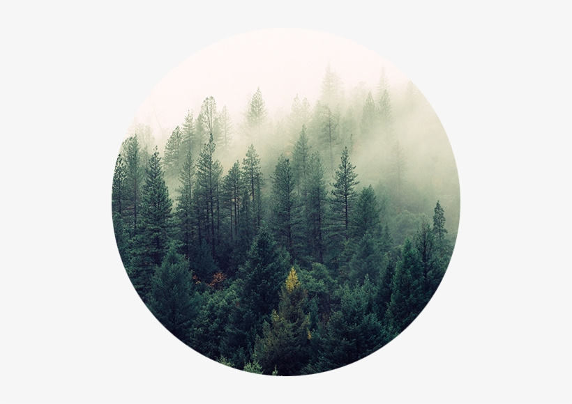 """Forestry Solutions - Society6 Ascension Wall Tapestry Small: 51"""" X 60"""", transparent png #934565"""
