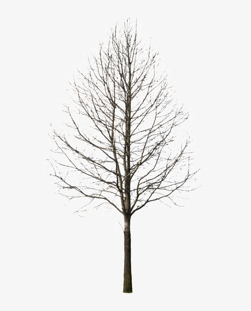 Winter Trees Png - Pine Tree Cutout Png, transparent png #935713