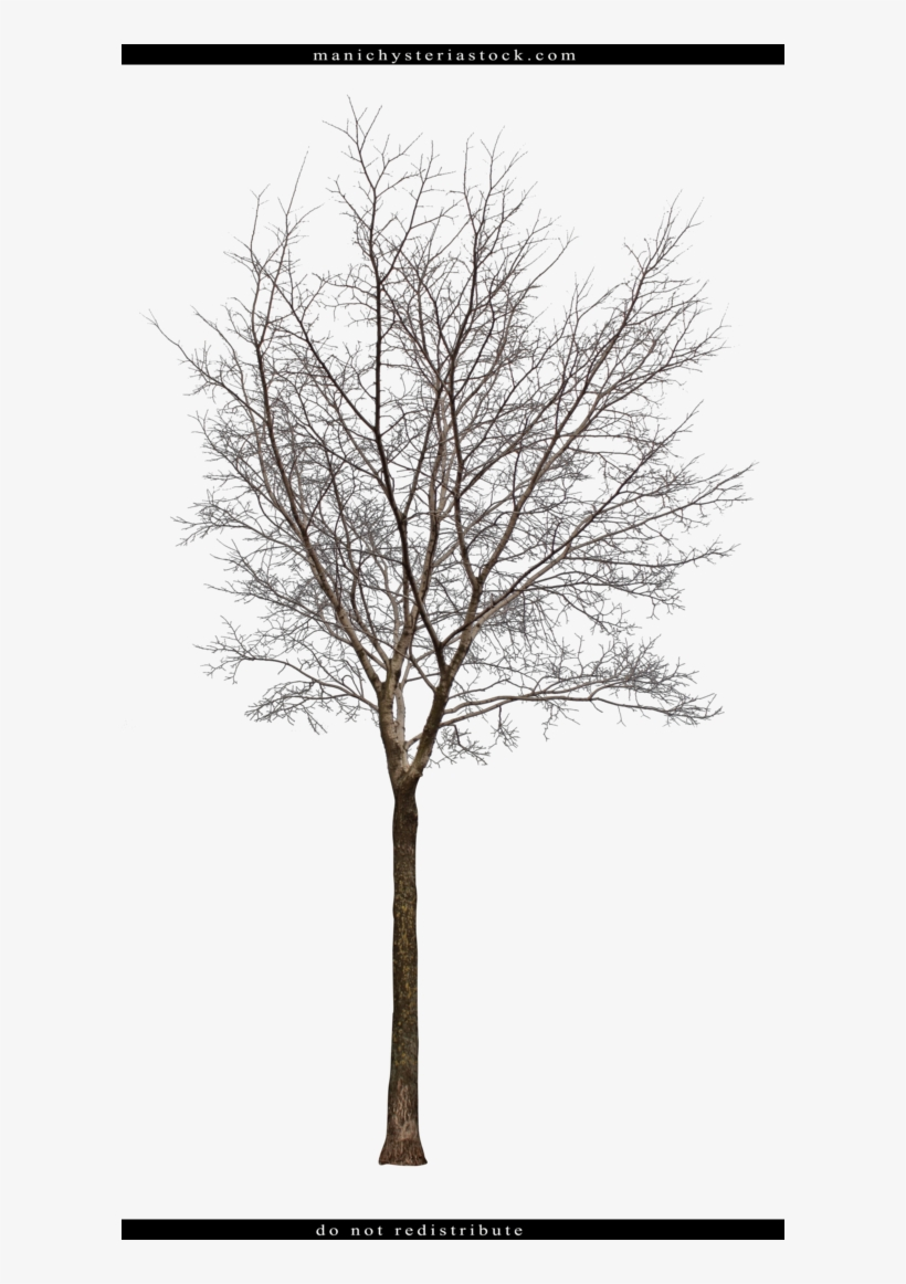 Tree Cut Out By - Bare Tree Cut Out, transparent png #936518