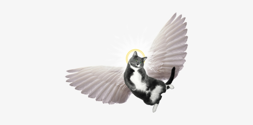 Angel Wings For Cats Png - Spirit-led Preaching: The Holy Spirit's Role, transparent png #938596