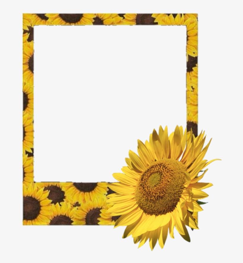 #polaroid #frame #flower #sunflower #sunflowers - Aesthetic Polaroid Film Frame Png, transparent png #9305143
