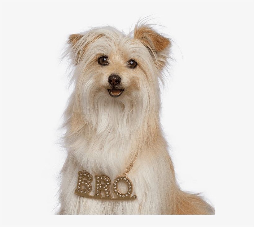 Brody - Pup Star 4 Pup Star Christmas Brody, transparent png #9321620