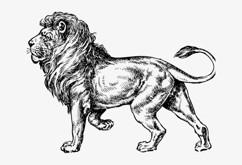 Drawn Lion Loin - Lion Drawing Side View, transparent png #9327865