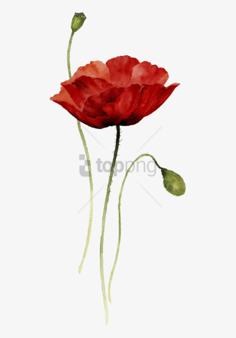 Free Png Download Red Poppy Watercolor Tattoo Png Images - Watercolor Drawing Flower, transparent png #9345539
