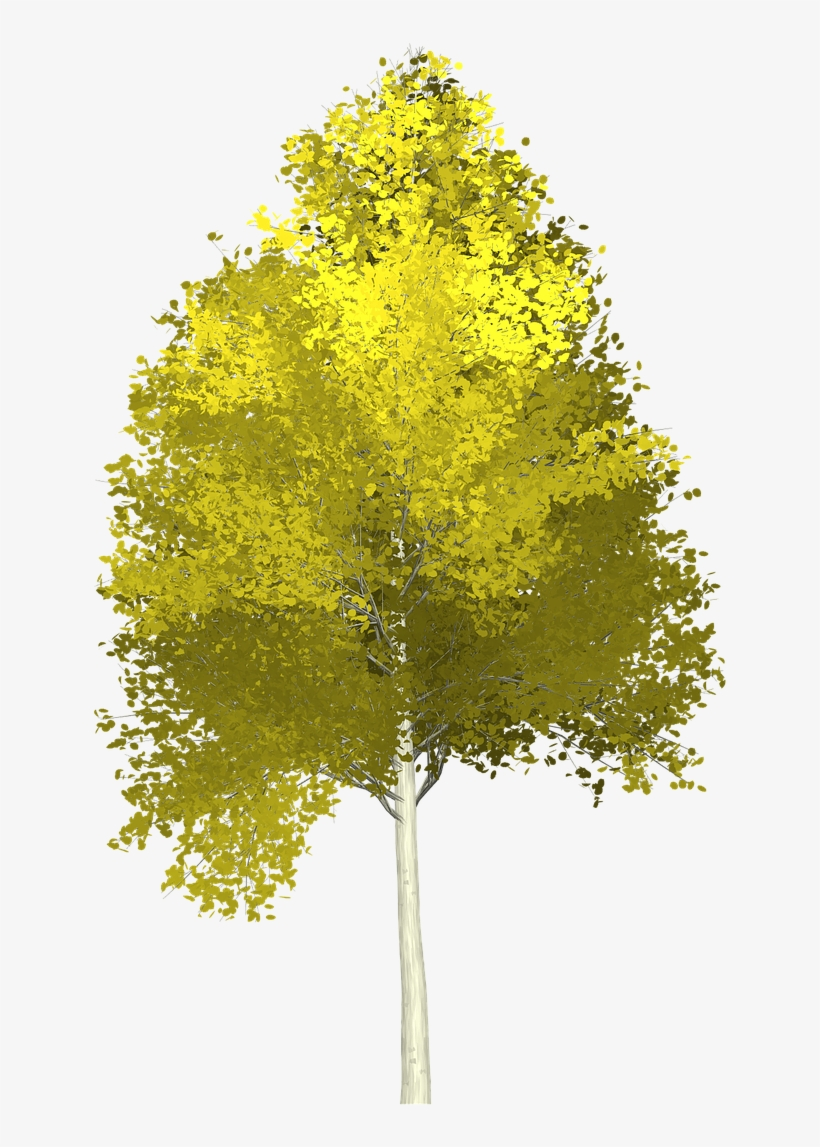 Forest, Aspen, Tree, Painted Tree, Nature, Green - Aspen Tree Transparent Background, transparent png #9360006