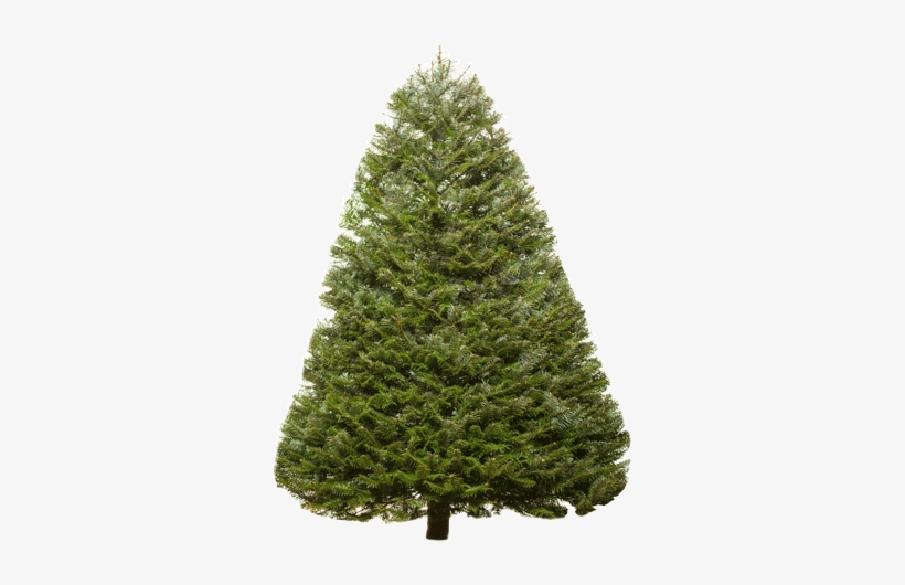 Christmas Trees Types Valley View Christmas Trees - Transparent Douglas Fir Tree, transparent png #945821
