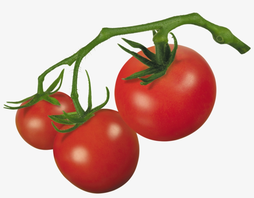 Vector Royalty Free Library Crude Drawing Tomatoes - Tomato On Vine Clipart, transparent png #947656