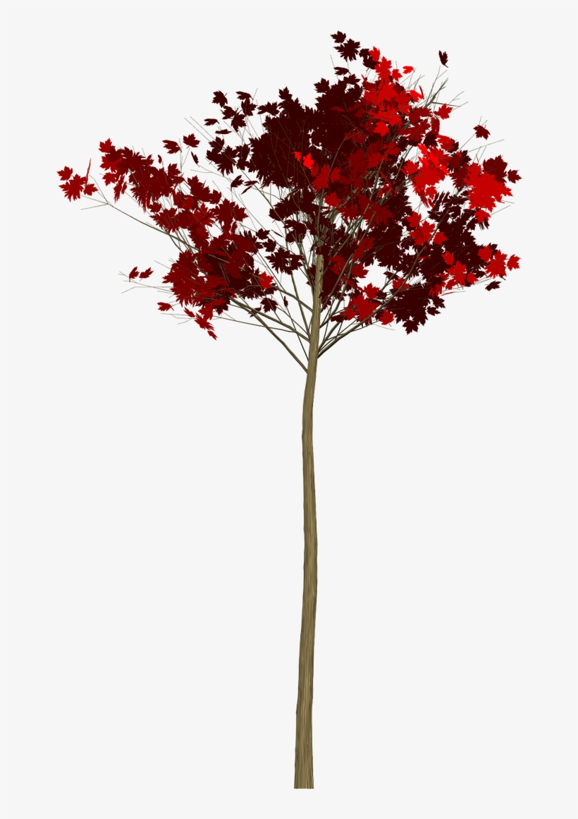 Maple,tree,painted Tree,red,nature,image Painting,plant, - Tree, transparent png #9463022