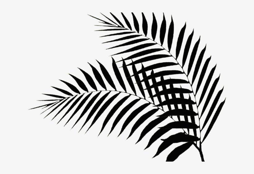 Drawn Palm Tree Palm Fronds - Black Palm Tree Leaves, transparent png #9463939