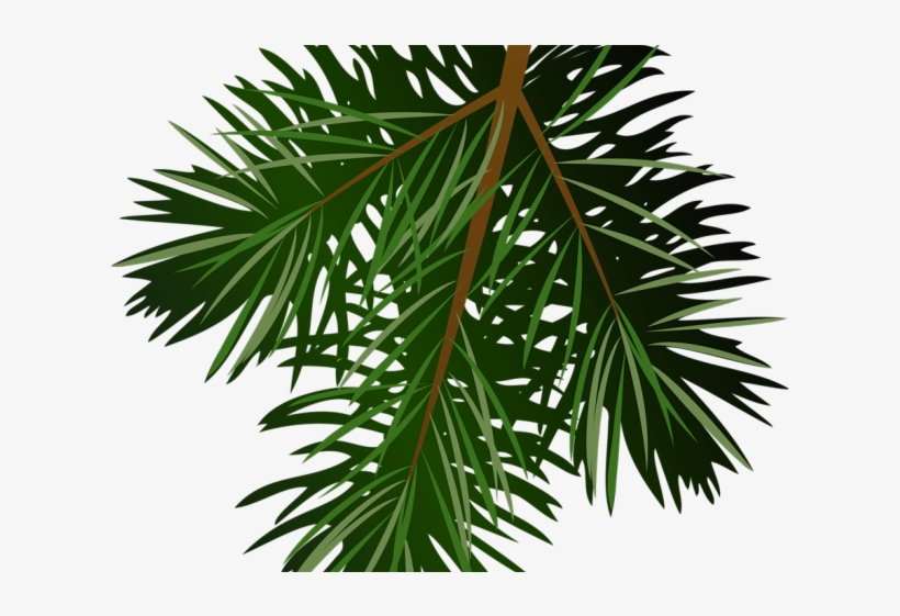 Christmas Tree Clipart Limb - Pine Branch Png Free, transparent png #9488939
