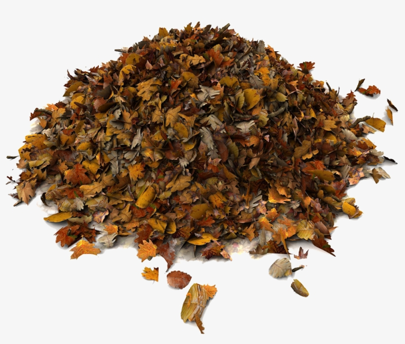 Rummage Sale Pile Of Leaves Png - Dried Leaves 3d Model - Free