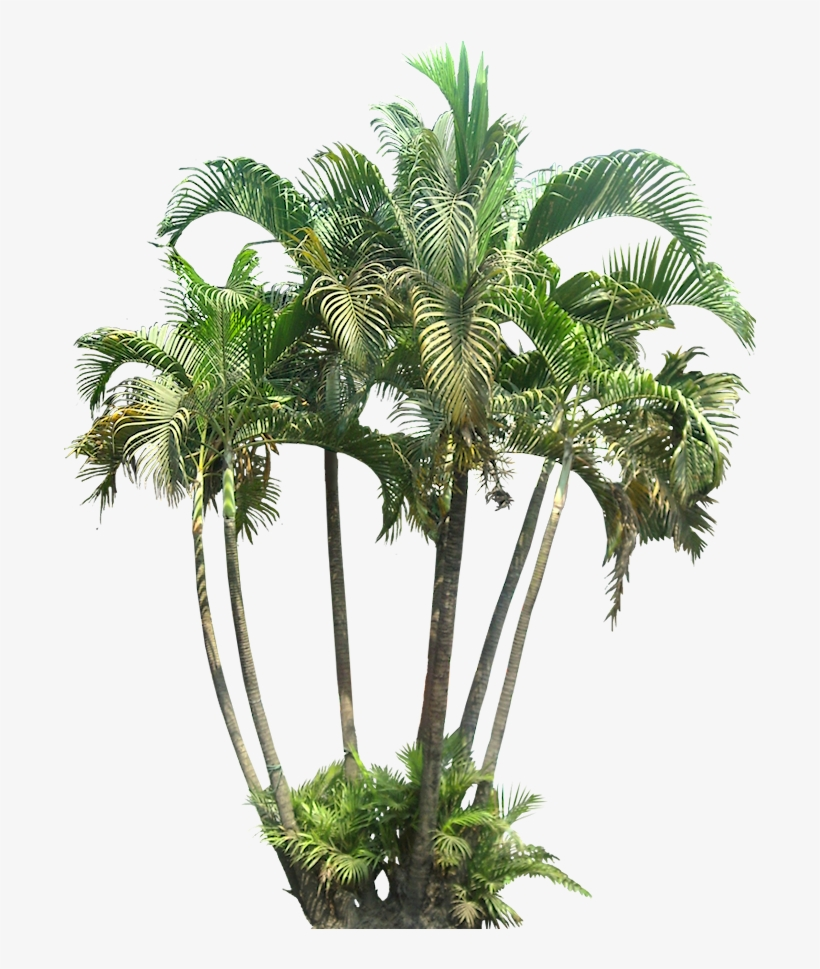 A Collection Of Tropical Plant Images With Transparent - Tropical Plants Png, transparent png #958558