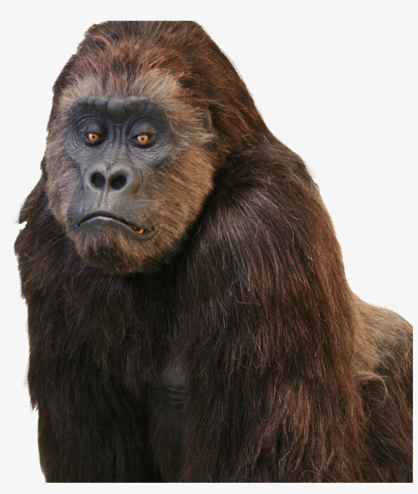 The World Truly Loves A Great Performer Inside A Wonderful - Realistic Gorilla Suit, transparent png #9528743