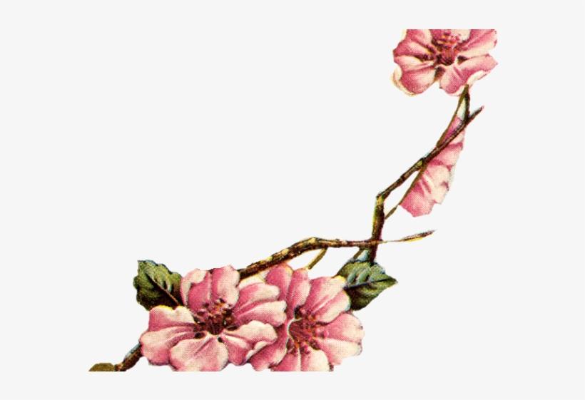 Sakura Blossom Clipart Vintage - Flower Vintage Cherry Blossoms, transparent png #9530268
