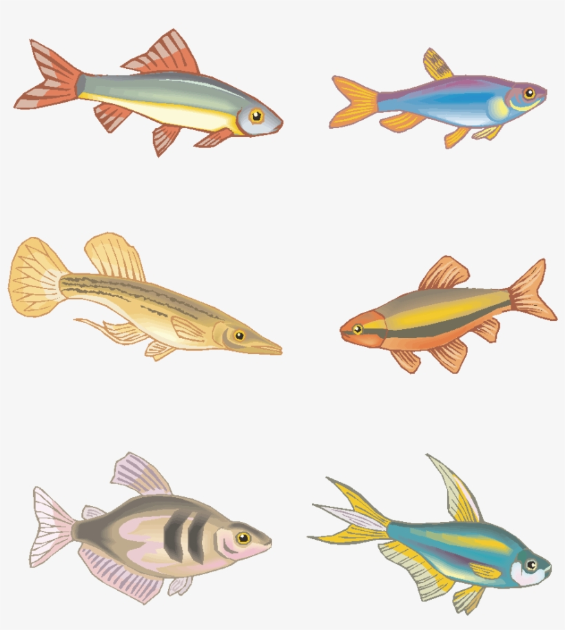 Vector Fish Hand Drawn Marine Animals Png And Image - Bony-fish, transparent png #9532175