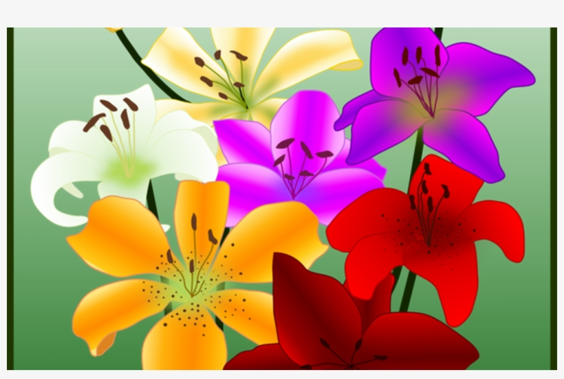 Flower Drawing Yellow Easter Lily Petal Free Commercial - Tiger Lily, transparent png #9539282