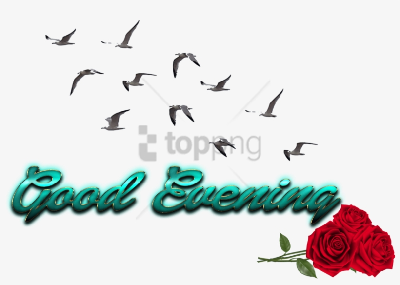 Free Png Cb Birds Picsart Png Image With Transparent - Picsart Cb Png All, transparent png #9578975