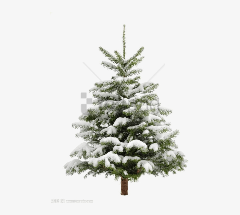 Free Png Pine Tree Png Image With Transparent Background - Christmas Tree Snow Transparent Background, transparent png #9589559