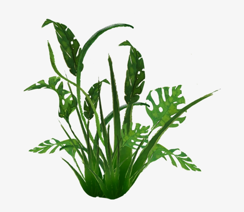 938 Jungle Plants 01 By Tigers Stock A - Transparent Jungle Plants, transparent png #9592062