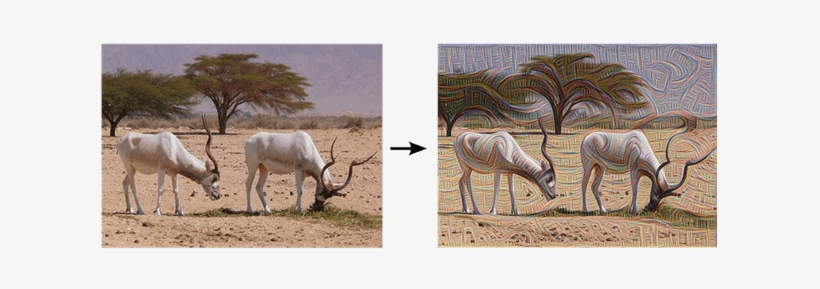 Ibex Grazing, Pre And Post Edge Detection - Google Deep Dream Before After, transparent png #967013