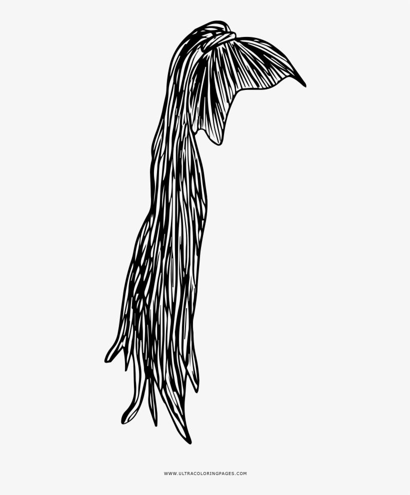 High Ponytail Coloring Page Coda Di Cavallo Disegno Free