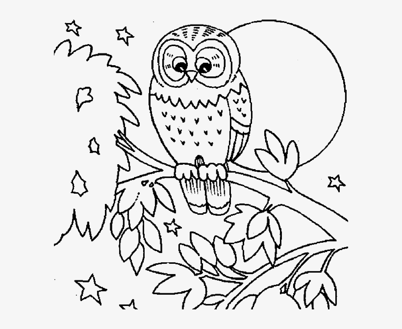 Owl Colouring Sheets Cute Owl Coloring Pages