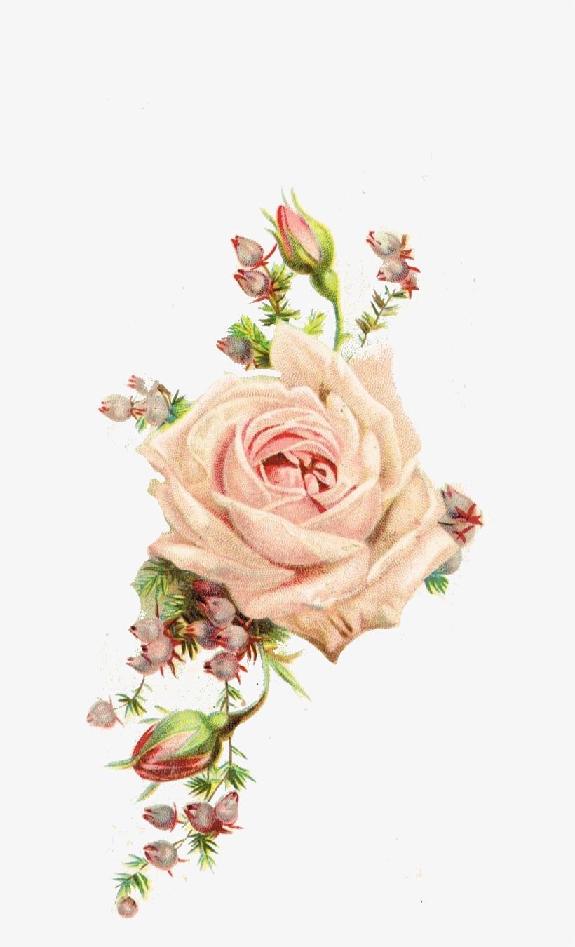 Roses, Vintage Printable - Vintage Flowers, transparent png #977311